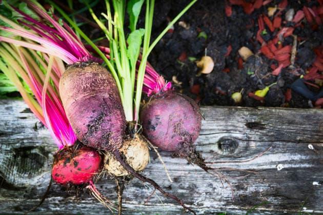 Different varieties of beets.